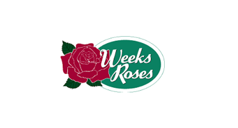 Weeks Roses - best gardening plants
